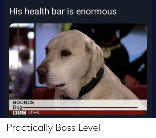 News, Bbc News, and Bbc: His health bar is enormous  BOUNCE  Dog-  BBC NEWS Practically Boss Level