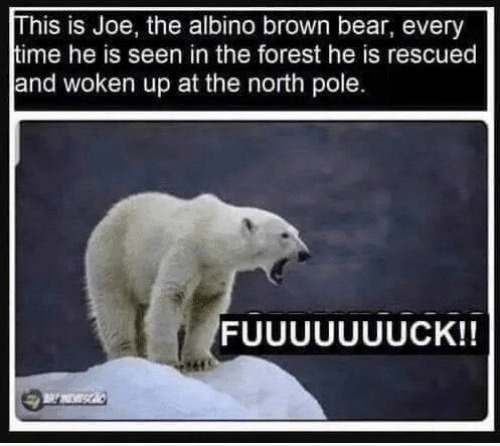 Memes, Bear, and 🤖: his is Joe, the albino brown bear, every  ime he is seen in the forest he is rescued  and woken up at the north pole