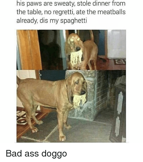 Ass, Bad, and Funny: his paws are sweaty, stole dinner from  the table, no regretti, ate the meatballs  already, dis my spaghetti Bad ass doggo