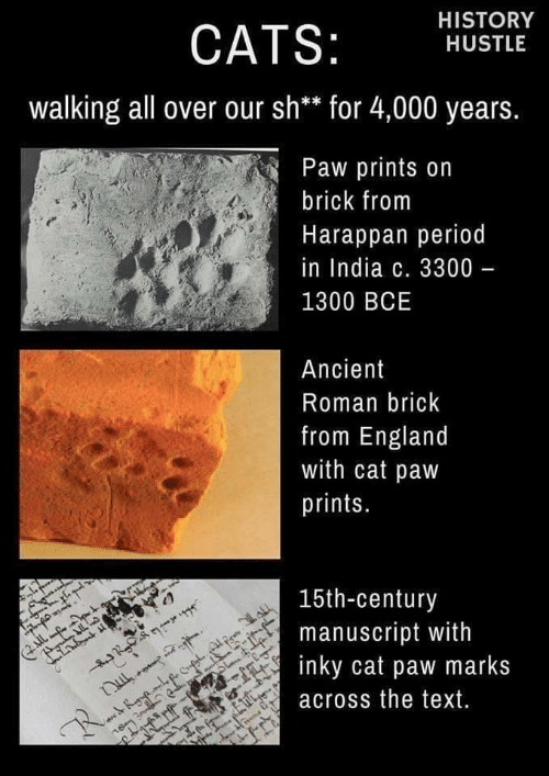 period: HISTORY  CATS:  HUSTLE  walking all over our sh** for 4,000 years.  Paw prints on  brick from  Harappan period  in India c. 3300 -  1300 BCE  Ancient  Roman brick  from England  with cat paw  prints.  15th-century  manuscript with  inky cat paw marks  IL  across the text.  R