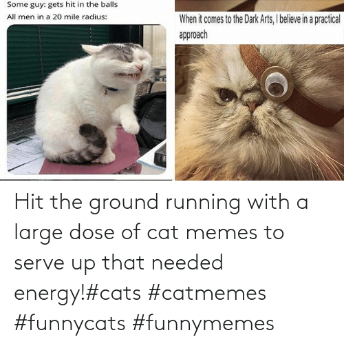 Running: Hit the ground running with a large dose of cat memes to serve up that needed energy!#cats #catmemes #funnycats #funnymemes