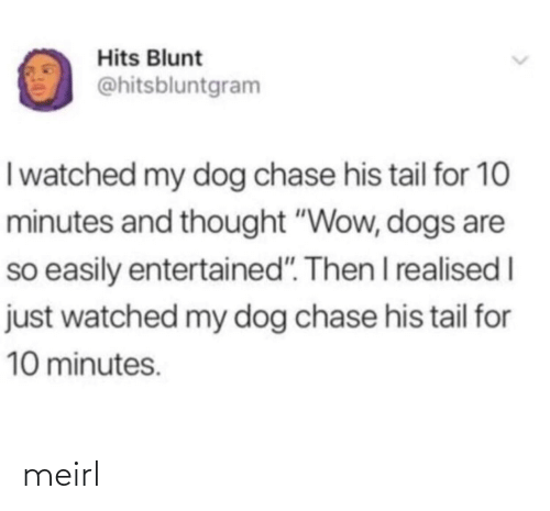 "I Watched: Hits Blunt  @hitsbluntgram  I watched my dog chase his tail for 10  minutes and thought ""Wow, dogs are  so easily entertained"". Then I realised I  just watched my dog chase his tail for  10 minutes. meirl"