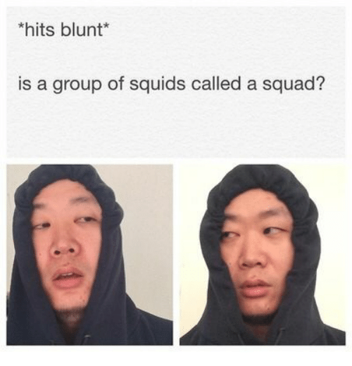 Squad, Group, and Blunt: hits blunt*  is a group of squids called a squad?