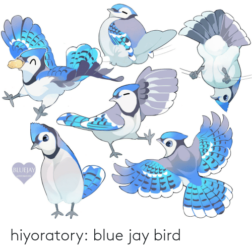 Blue: hiyoratory:  blue jay bird
