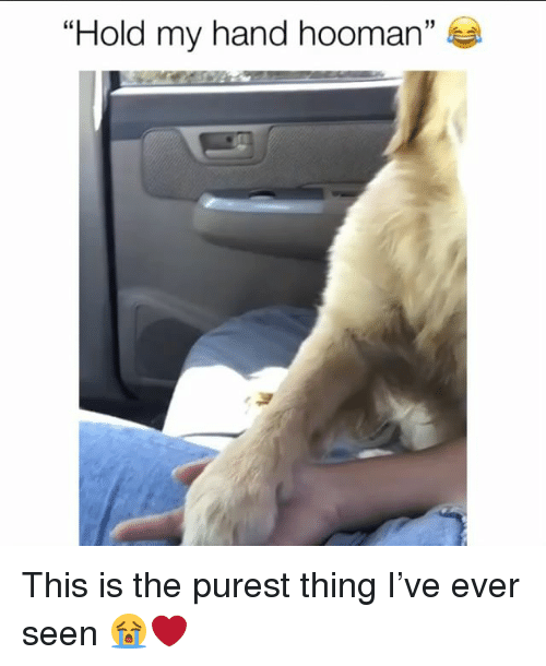 """Memes, 🤖, and Thing: """"Hold my hand hooman""""  60 This is the purest thing I've ever seen 😭❤️"""
