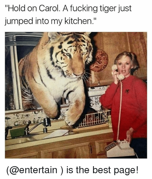 """Carols: """"Hold on Carol. A fucking tiger just  jumped into my kitchen."""" (@entertain ) is the best page!"""