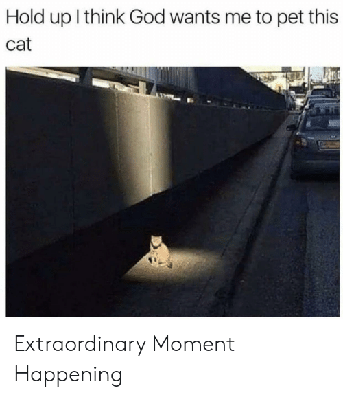 God, Cat, and Pet: Hold up l think God wants me to pet this  Cat Extraordinary Moment Happening