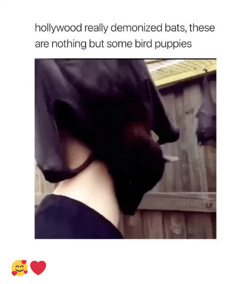 Puppies, Girl Memes, and Hollywood: hollywood really demonized bats, these  are nothing but some bird puppies 🥰❤️