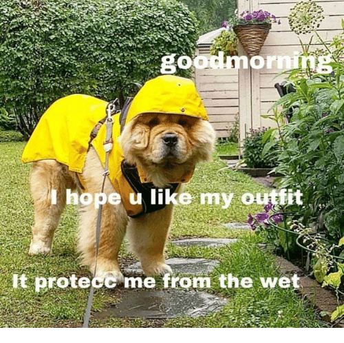 Hope, Wet, and Like: hope u like my outtit  t protecc me from the wet