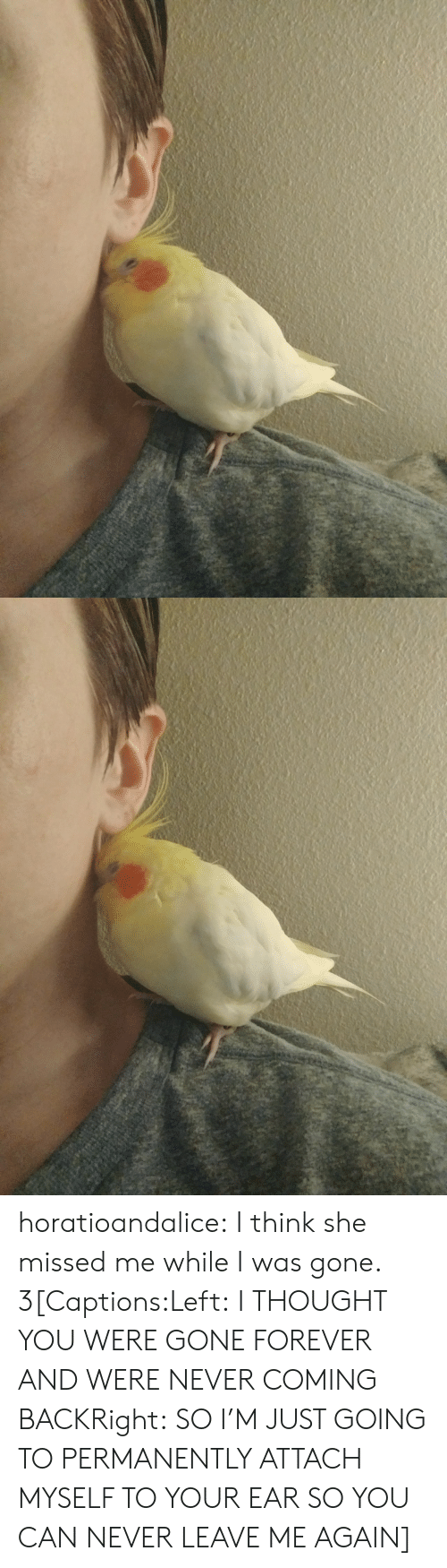 Tumblr, Blog, and Forever: horatioandalice:  I think she missed me while I was gone.  3[Captions:Left: I THOUGHT YOU WERE GONE FOREVER AND WERE NEVER COMING BACKRight: SO I'M JUST GOING TO PERMANENTLY ATTACH MYSELF TO YOUR EAR SO YOU CAN NEVER LEAVE ME AGAIN]