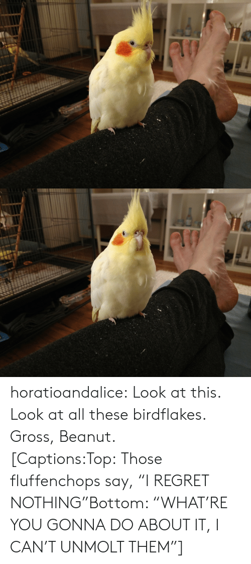 """Regret, Tumblr, and Blog: horatioandalice:  Look at this. Look at all these birdflakes. Gross, Beanut.[Captions:Top:Those fluffenchops say, """"I REGRET NOTHING""""Bottom: """"WHAT'RE YOU GONNA DO ABOUT IT, I CAN'T UNMOLT THEM""""]"""