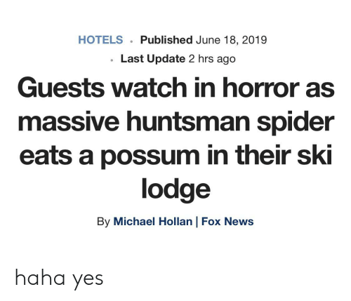 News, Spider, and Fox News: HOTELS  Published June 18, 2019  Last Update 2 hrs ago  Guests watch in horror as  massive huntsman spider  eats a possum in their ski  lodge  By Michael Hollan | Fox News haha yes