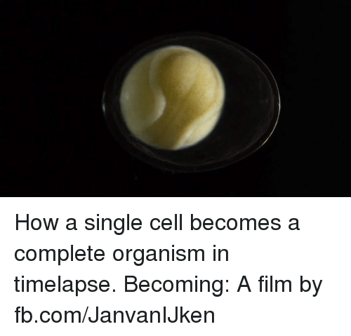 organism: How a single cell becomes a complete organism in timelapse.  Becoming: A film by fb.com/JanvanIJken