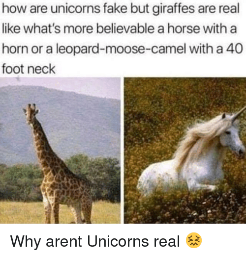 Fake, Horse, and Believable: how are unicorns fake but giraffes are real  like what's more believable a horse with a  horn or a leopard-moose-camel with a 40  foot neck Why arent Unicorns real 😖