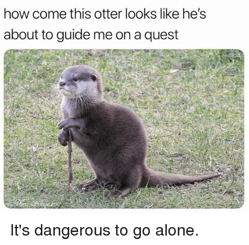 Being Alone, Dank, and Quest: how come this otter looks like he's  about to guide me on a quest It's dangerous to go alone.