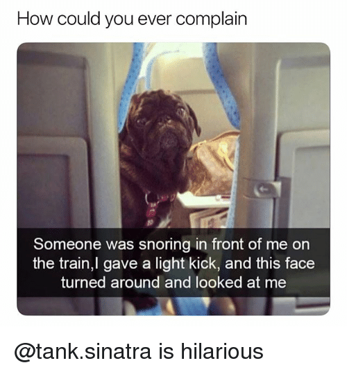 Train, Dank Memes, and Hilarious: How could you ever complain  Someone was snoring in front of me on  the train,l gave a light kick, and this face  turned around and looked at me @tank.sinatra is hilarious
