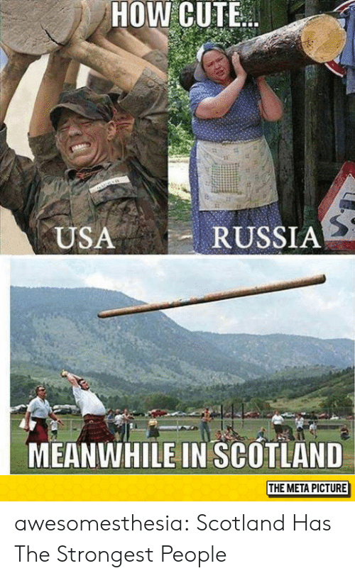 Cute, Tumblr, and Blog: HOW CUTE  RUSSIA  USA  MEANWHILE IN SCOTLAND  THE META PICTURE awesomesthesia:  Scotland Has The Strongest People