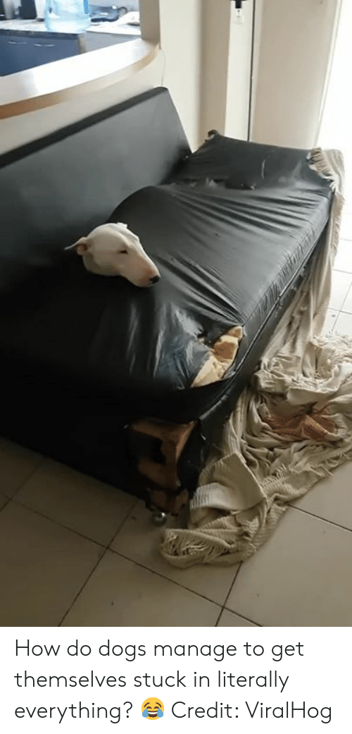 Dogs, How, and Get: How do dogs manage to get themselves stuck in literally everything? 😂  Credit: ViralHog