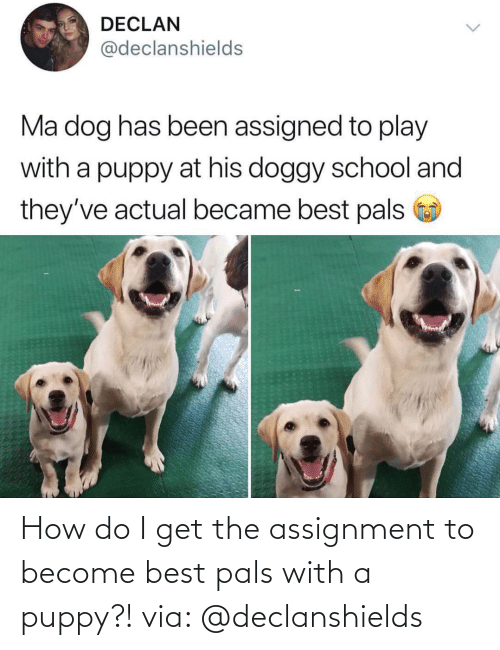 Become: How do I get the assignment to become best pals with a puppy?! via: @declanshields