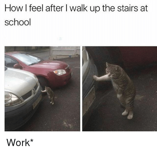 School, Work, and Girl Memes: How I feel after I walk up the stairs at  school Work*