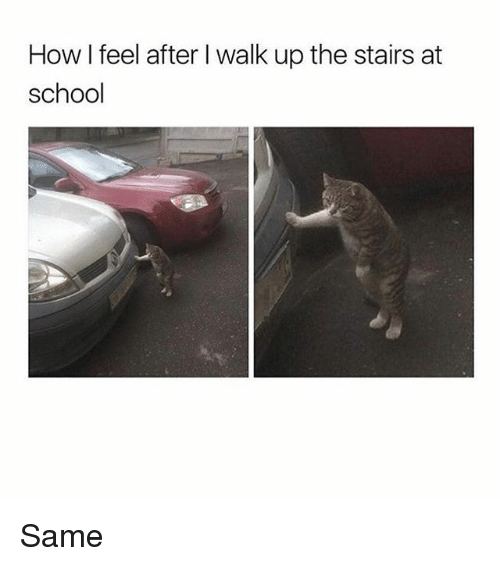 Memes, School, and 🤖: How I feel after I walk up the stairs at  school Same