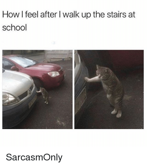 Funny, Memes, and School: How I feel after l walk up the stairs at  OW  school SarcasmOnly