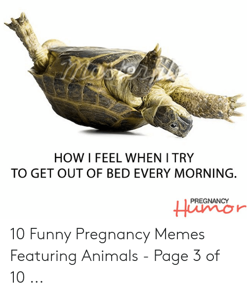 Animals, Funny, and Memes: HOW I FEEL WHEN I TRY  TO GET OUT OF BED EVERY MORNING.  PREGNANCY 10 Funny Pregnancy Memes Featuring Animals - Page 3 of 10 ...
