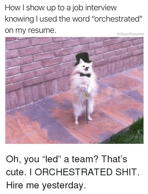 """Cute, Job Interview, and Memes: How I show up to a job interview  knowing l used the word """"orchestrated""""  on my resume.  @StupidResumes Oh, you """"led"""" a team? That's cute. I ORCHESTRATED SHIT. Hire me yesterday."""