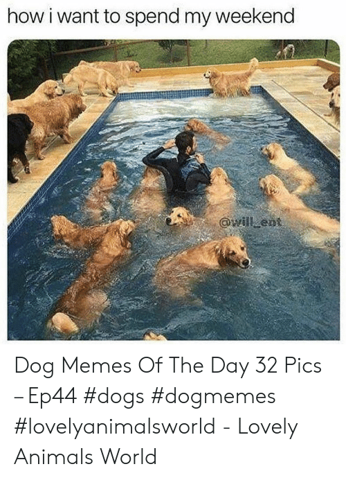 Animals, Dogs, and Memes: how i want to spend my weekend Dog Memes Of The Day 32 Pics – Ep44 #dogs #dogmemes #lovelyanimalsworld - Lovely Animals World