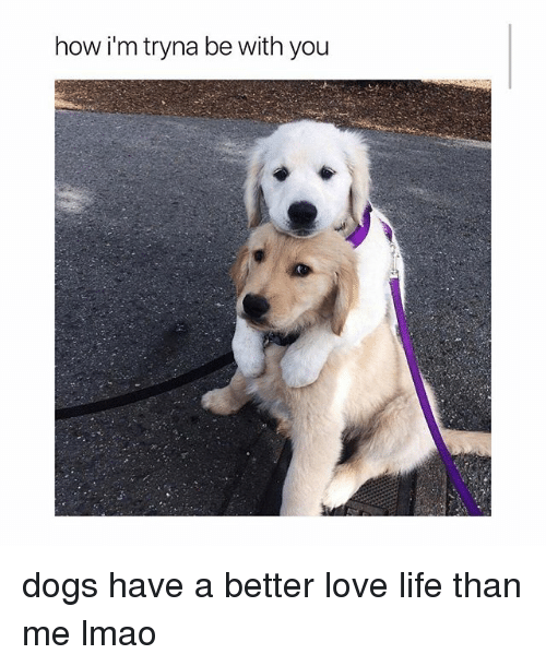Dogs, Life, and Lmao: how i'm tryna be with you dogs have a better love life than me lmao