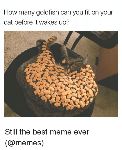 Funny, Goldfish, and Meme: How many goldfish can you fit on your  cat before it wakes up? Still the best meme ever (@memes)