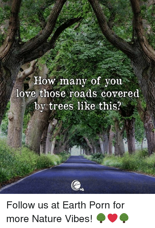 Love, Earth, and Nature: How many of you.  love those roads covered  by trees like this? Follow us at Earth Porn for more Nature Vibes! 🌳❤️🌳