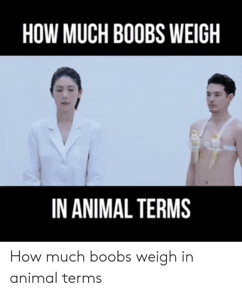 Animal, Boobs, and How: HOW MUCH BOOBS WEIGH  IN ANIMAL TERMS How much boobs weigh in animal terms
