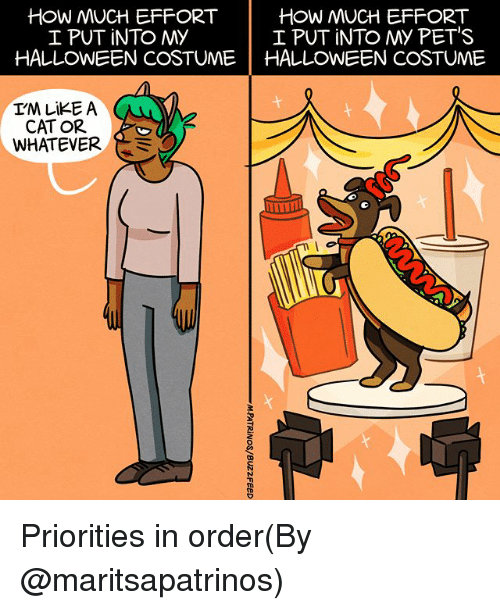 Memes, Pets, and 🤖: HOW MUCH EFFORT  I PUT iNTO MY  HOW MUCH EFFORT  I PUT INTO My PET'S  HALLONEEN COSTUMEHALLOWEEN COSTUME  CAT OR  WHATEVER Priorities in order(By @maritsapatrinos)