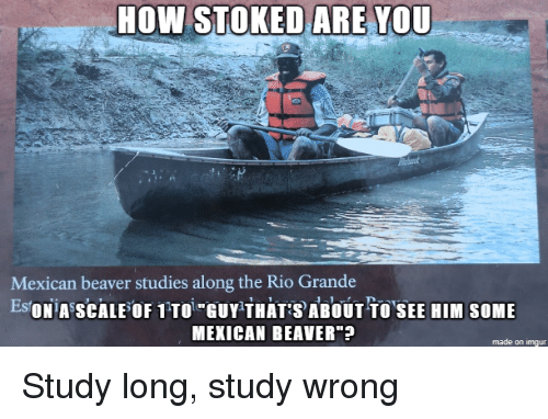 "Imgur, Mexican, and How: HOW STOKED ARE YOU  Mexican beaver studies along the Rio Grande  EsONiA SCALEOF 1TTOi GUY THATABOUT TOSEE HIM SOME  MEXICAN BEAVER""  made on imgur Study long, study wrong"