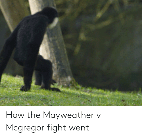 Mayweather, Fight, and How: How the Mayweather v Mcgregor fight went