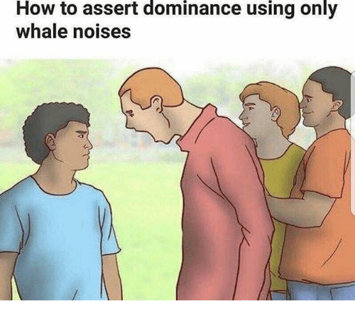 How To, Dank Memes, and How: How to assert dominance using only  whale noises