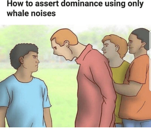 How To, How, and Whale: How to assert dominance using only  whale noises