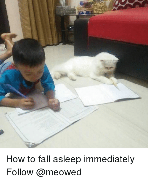 Fall, Memes, and How To: How to fall asleep immediately Follow @meowed