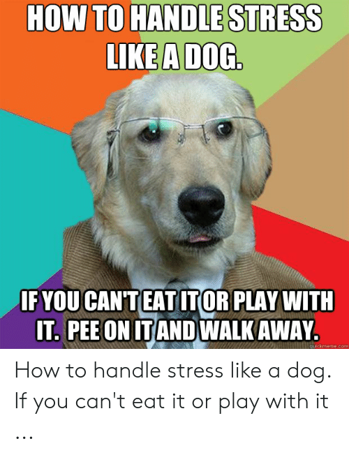 Funny Stress Memes: HOW TO HANDLE STRESS  LIKE A DOC  FYOU CAN'TEATITOR PLAY WITH  IT PEE ON ITANDWALK AWAY  quickmeme.com How to handle stress like a dog. If you can't eat it or play with it ...
