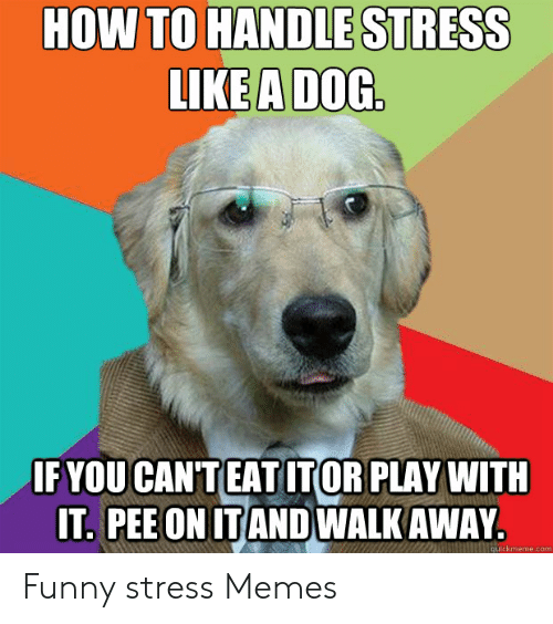 Funny Stress Memes: HOW TO HANDLE STRESS  LIKE A DOG  IF YOU CANTEATITOR PLAY WITH  IT. PEE ON ITANDWALK AWAY.  quickmeme.com Funny stress Memes