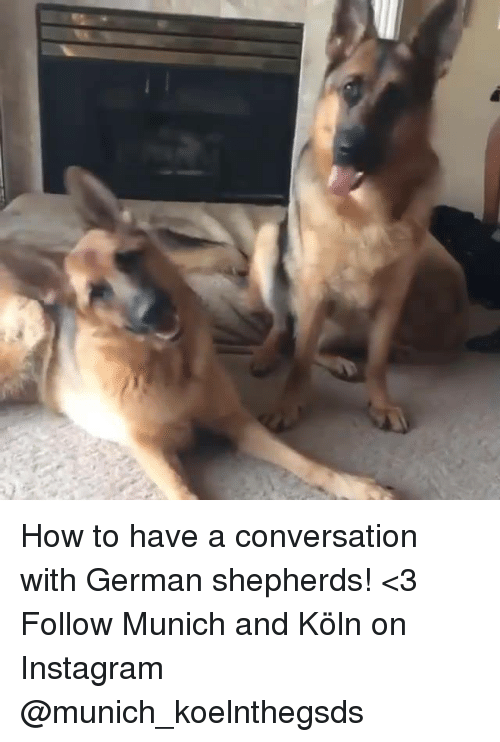 Memes, Converse, and German Shepherd: How to have a conversation with German shepherds! <3  Follow Munich and Köln on Instagram @munich_koelnthegsds