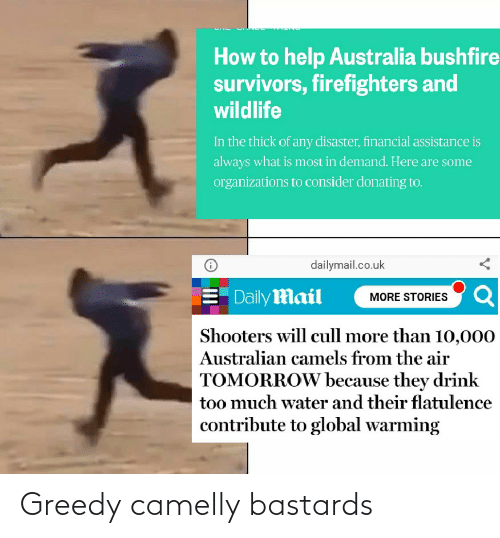 Organizations: How to help Australia bushfire  survivors, firefighters and  wildlife  In the thick of any disaster, financial assistance is  always what is most in demand. Here are some  organizations to consider donating to.  dailymail.co.uk  E Daily Mail  MORE STORIES Q  Shooters will cull more than 10,000  Australian camels from the air  TOMORROW because they drink  too much water and their flatulence  contribute to global warming Greedy camelly bastards