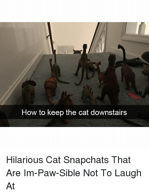 Funny, How To, and Hilarious: How to keep the cat downstairs Hilarious Cat Snapchats That Are Im-Paw-Sible Not To Laugh At