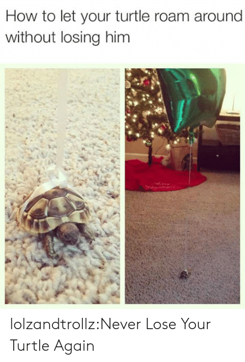 Tumblr, Blog, and How To: How to let your turtle roam around  without losing him lolzandtrollz:Never Lose Your Turtle Again