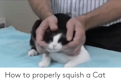 cat: How to properly squish a Cat