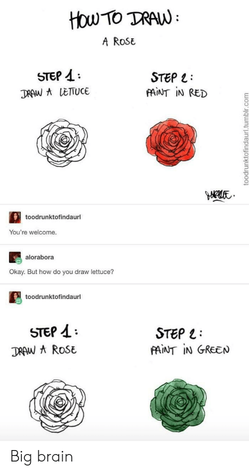Tumblr, Brain, and How To: How TO TRAW  A ROSE  STEP  STEP  FAINT IN RED  DRAW A LETTUCE  toodrunktofindaurl  You're welcome.  alorabora  Okay. But how do you draw lettuce?  toodrunktofindaurl  STEP  DRAW AROSE  STEP  PAINT IN GREEN  toodrunktofindaurl.tumblr.com Big brain