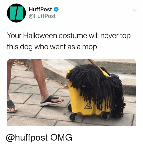 Halloween, Omg, and Dank Memes: HuffPost  @HuffPost  Your Halloween costume will never top  this dog who went as a mop @huffpost OMG