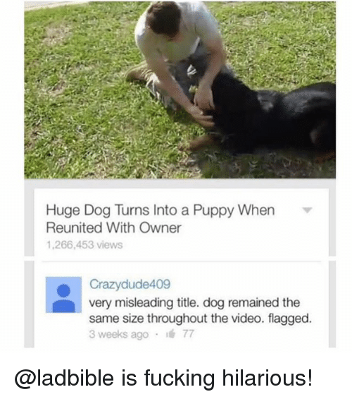 Fucking, Funny, and Meme: Huge Dog Turns Into a Puppy When  Reunited With Owner  1,266,453 views  ● Crazydude409  very misleading title. dog remained the  same size throughout the video. flagged.  3 weeks ago , 77 @ladbible is fucking hilarious!