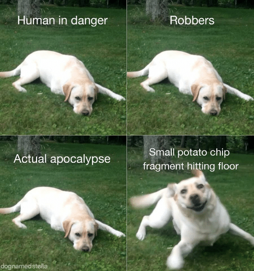 robbers: Human in danger  Robbers  Small potato chip  Actual apocalypse  fragment hitting floor  dognamedstella